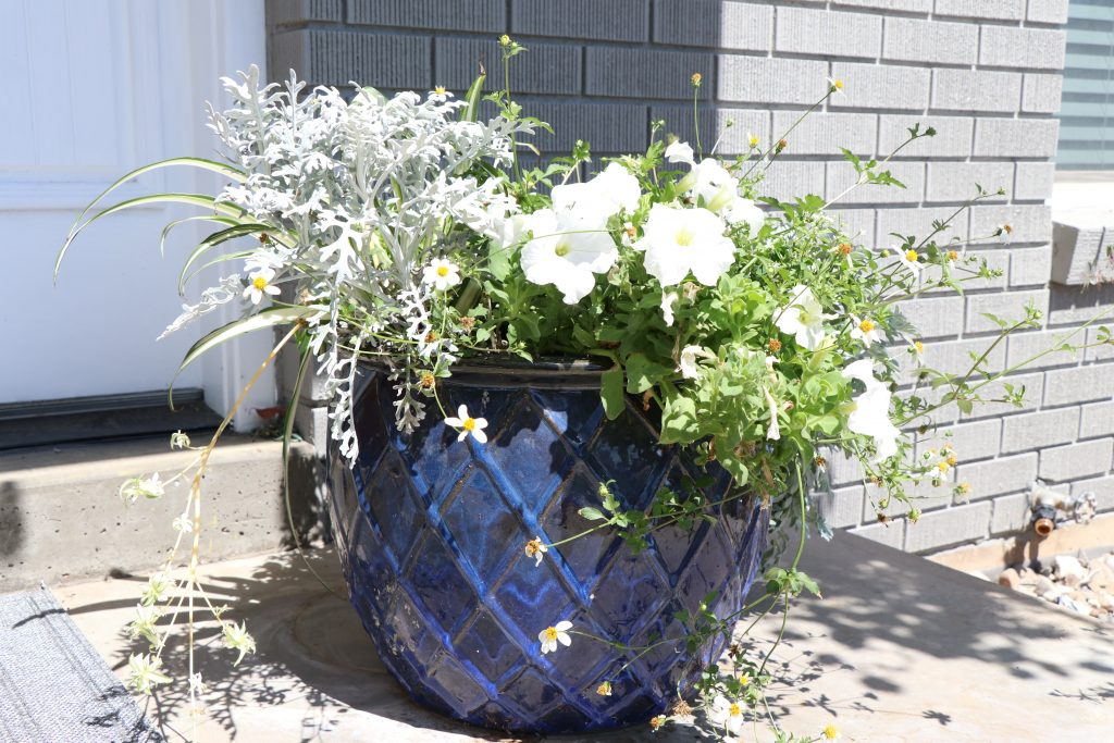 Our Potted Plant Garden Makeover 2019