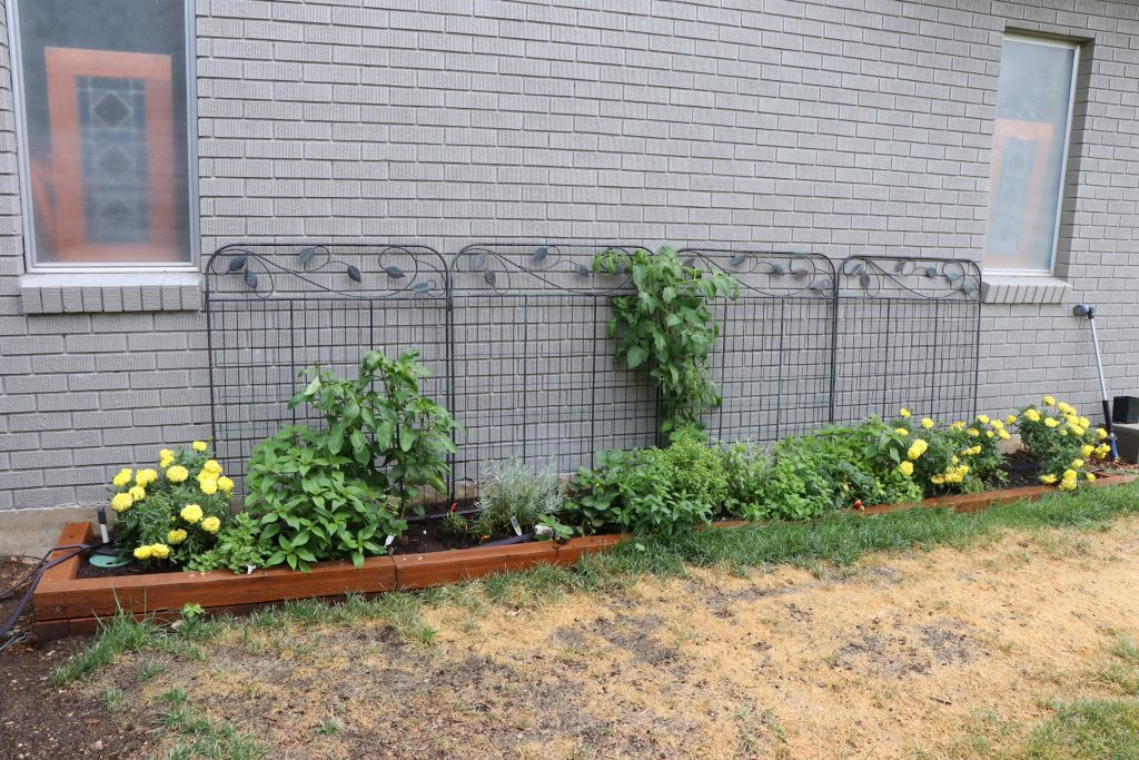 Our garden before and after makeover