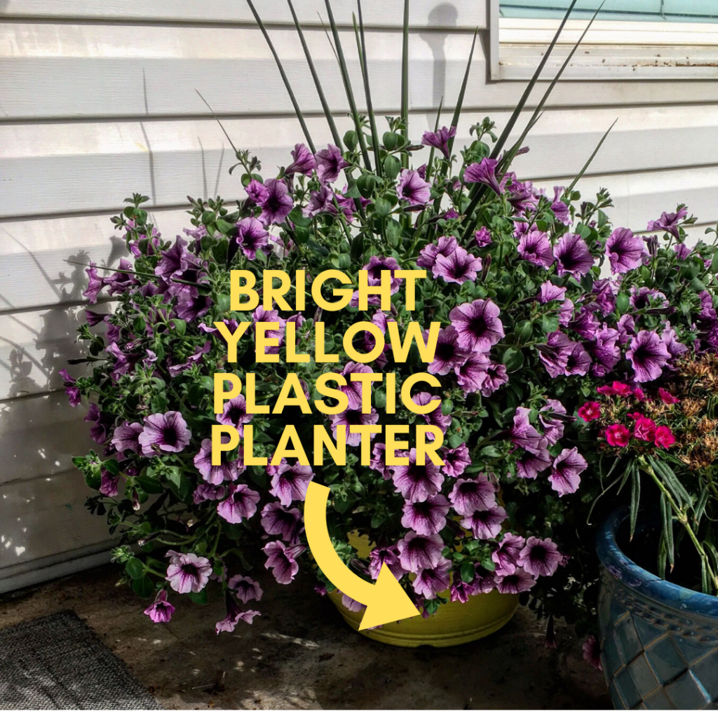 Bright Yellow Plastic Container with trailing Petunias